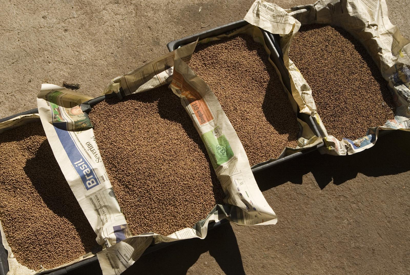 Ecosia-Seeds