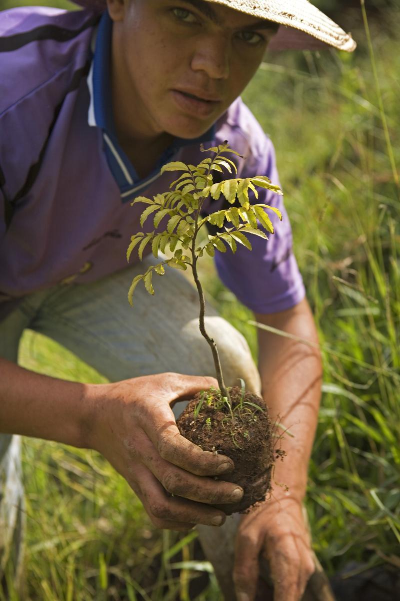 ecosia-brazil-jardinier