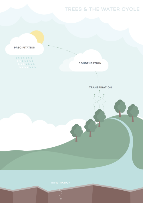 water-cycle-ecosia