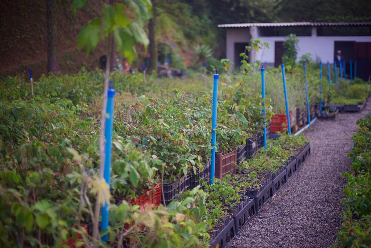 ITPA-tree-nursery--PACTO----1-2