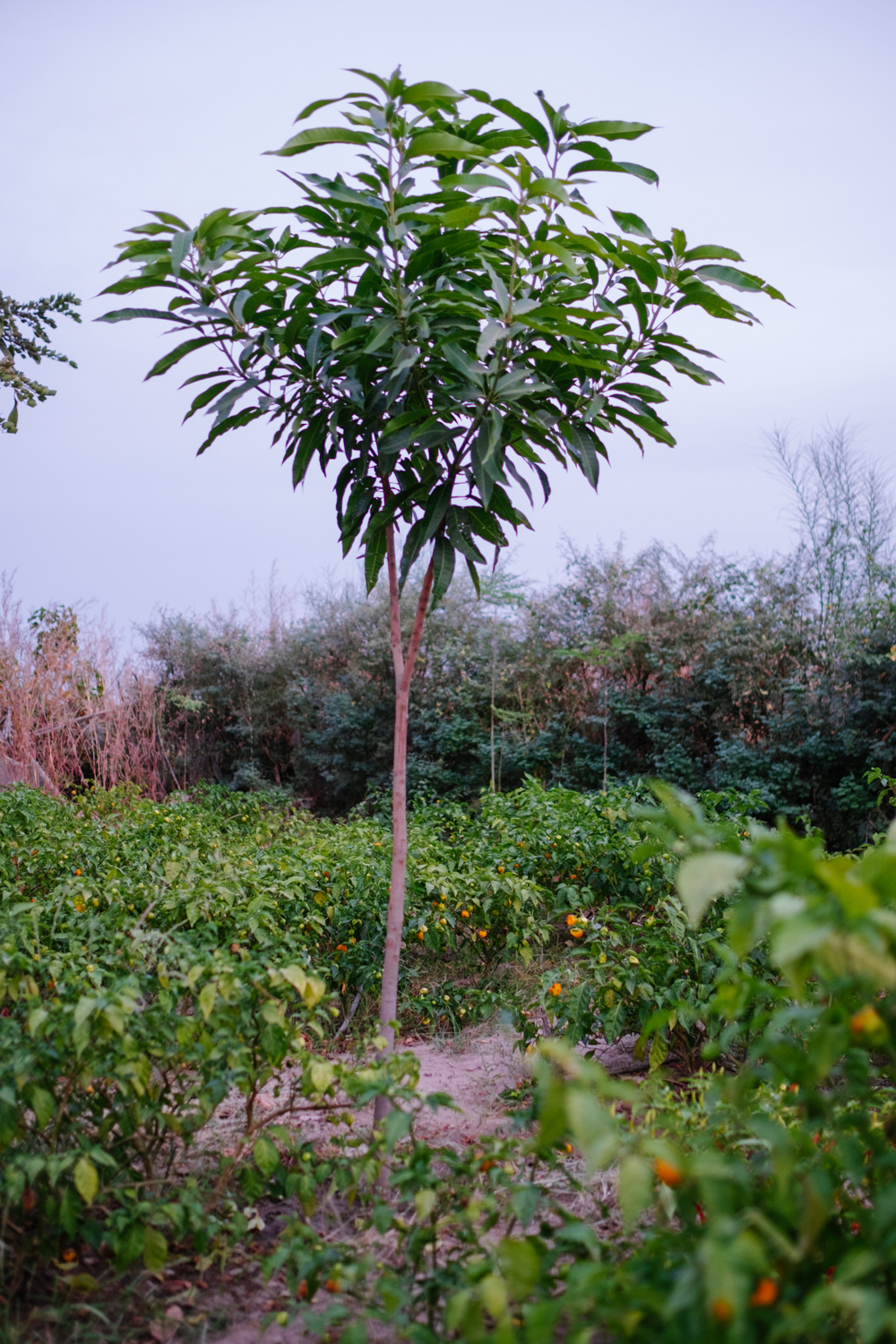 Senegal-Ecosia-Forest-Garden-Agroforestry-trees-climate-change--51-of-103-