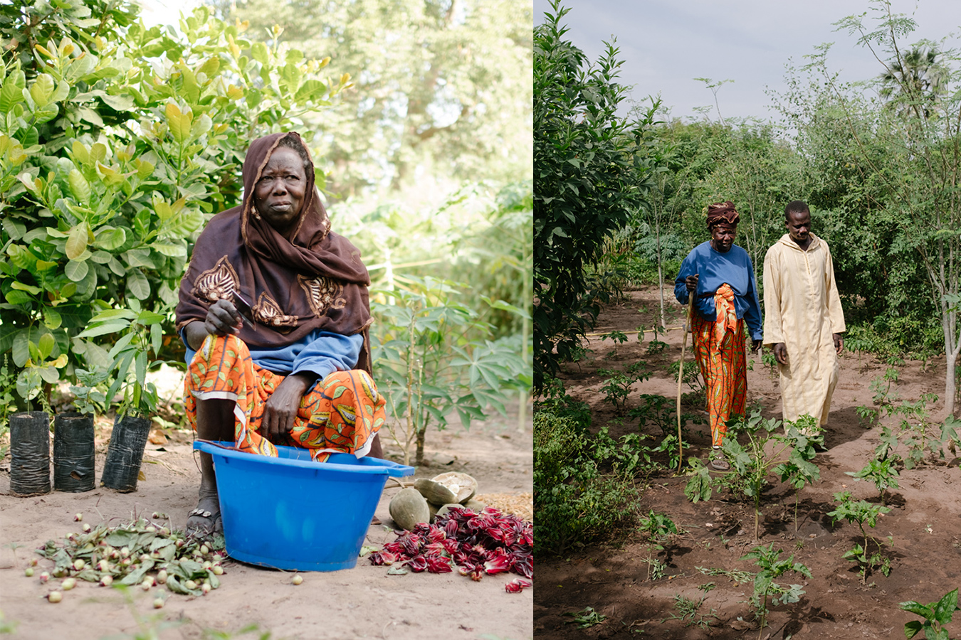 Senegal-Ecosia-Forest-Garden-Agroforestry-trees-climate-change--80-of-103-